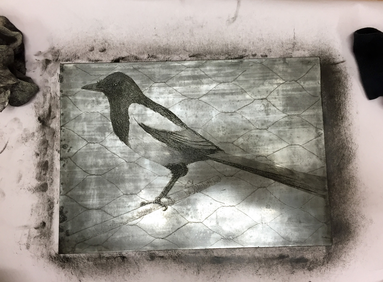 Magpie etching plate inked  image
